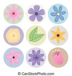 iconen, lentebloemen, bundel, seizoen, negen