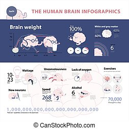 infographic, hersenen, 2, menselijk