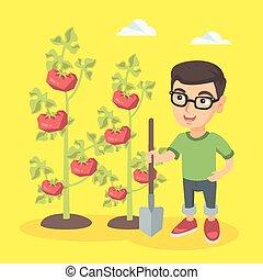 jongen, weinig; niet zo(veel), tomatoes., het cultiveren, farmer, kaukasisch