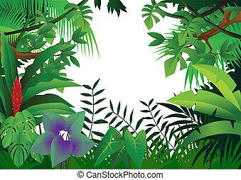 jungle, achtergrond