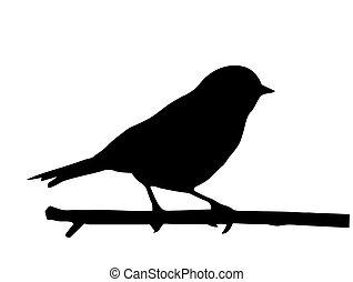 kleine, vector, silhouette, vogel, tak