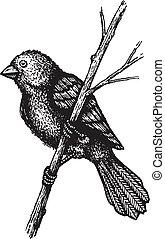 kleine, vogel, tak