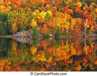 kleurrijke, herfst