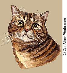 kleurrijke, tekening, 1, hand, kat, vector