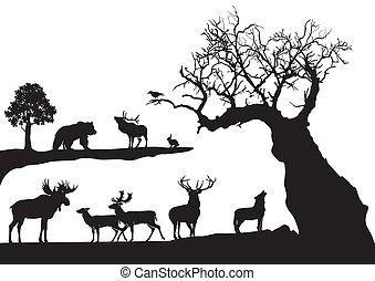 knoestig, boompje, fauna, vrijstaand