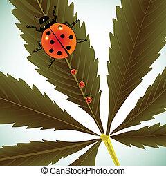 ladybugs, blad, cannabis