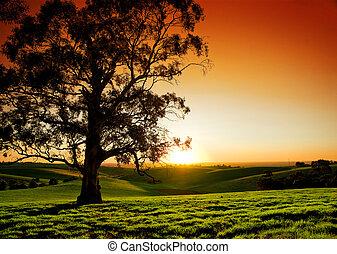 landelijk, ondergaande zon