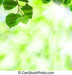 lente, bladeren, zon, groene, balk