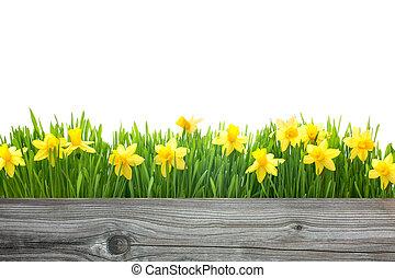 lentebloemen, daffodils