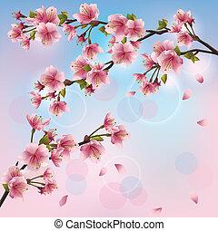 licht, sakura, achtergrond