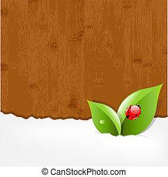lieveheersbeest, hout, achtergrond
