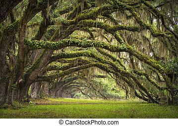 lowcountry, aas, landscape, eik, bomen, plantatie, leven, bos, sc, charleston, eiken, laan, spoelbak, zuidelijke carolina