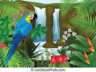 macaw, vogel, backgroun, waterval