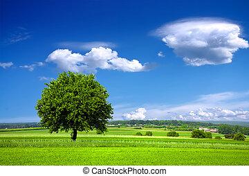 milieu, groene