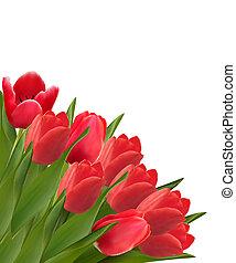 mooi, achtergrond., valentine, tulp, flowers., vector, dag