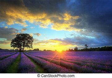 mooi, atmosferisch, rijp, vibrant, platteland, velden, beeld, hemel, lavendel, verbazend, ondergaande zon , engelse , wolken, op, landscape