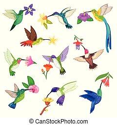 mooi, exotische , fauna, set, birdie, natuur, vliegen, karakter, vrijstaand, illustratie, vogel, tropische , vector, achtergrond, humming-bird, keerkring, het zoemen, bloemen, witte , vleugels, kolibrie