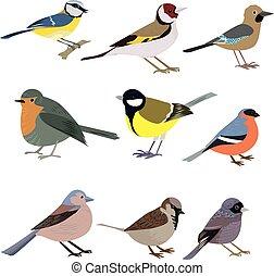 mooi, set, achtergrond., multi-colored, witte , vogels
