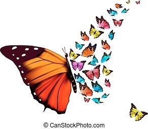 mooi, vlinder, vector., achtergrond.