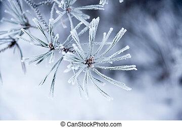 naalden, winter