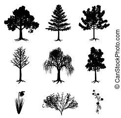 narcis, struik, chamomile, bomen