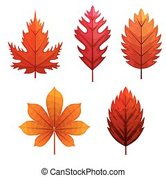 naturals, herfst, set, vellen