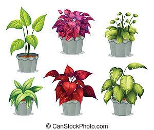 non-flowering, planten, zes