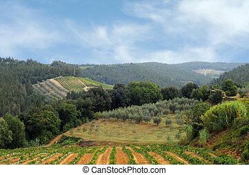 olive, velden, wijngaarden, tuscany, chianti