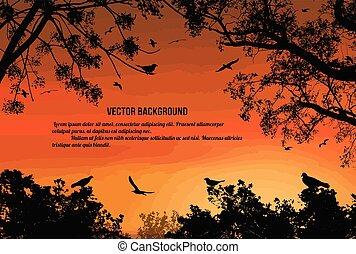 ondergaande zon , op, vliegen, boompje, vogels