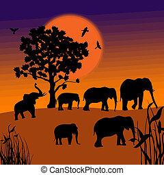ondergaande zon , savanne