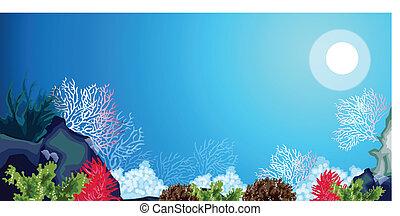 onkruid, onderwater, carols