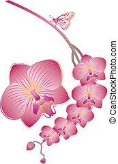 orchidee, vector