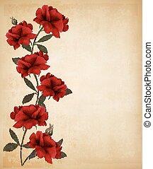 oud, rozen, achtergrond., papier, vector., rood