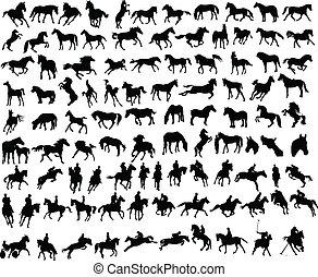 paarden, honderd