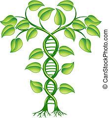 plant, concept, dna