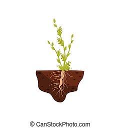 plant, illustration., bladeren, soil., vector, kleine, dik, wortel