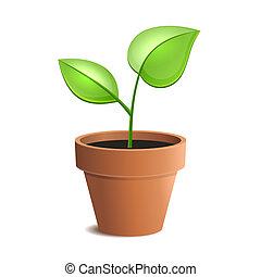 plant pot, jonge, vrijstaand, vector, groene, backgrounds., witte