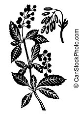 plant, vector, silhouette, witte achtergrond