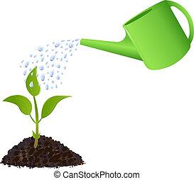 plant, watering, groene, jonge, groenteblik
