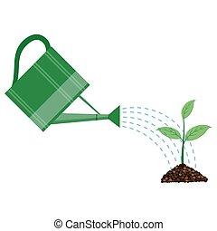 plant, watering, jonge, groenteblik