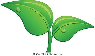 plant, witte , jonge, achtergrond