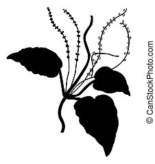 plantain, witte , vector, silhouette, achtergrond