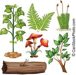 planten, anders, types