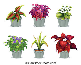 planten, anders, zes