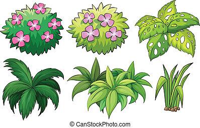 planten, decoratief, zes
