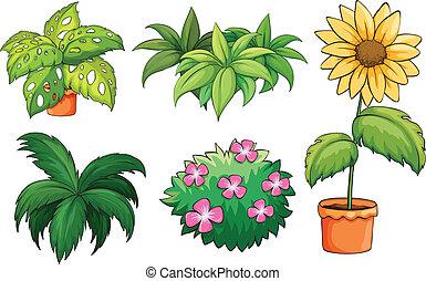 planten, flowerpots