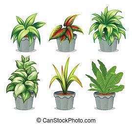 planten, groen leafy