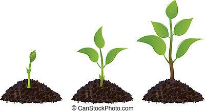 planten, groene, jonge