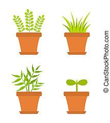 planten, pot