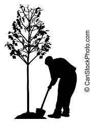 plantende boom, jonge man